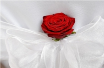 Red Rose in a White Crystal Organza Bow